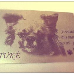 suns-antkapio-lentele su nuotrauka